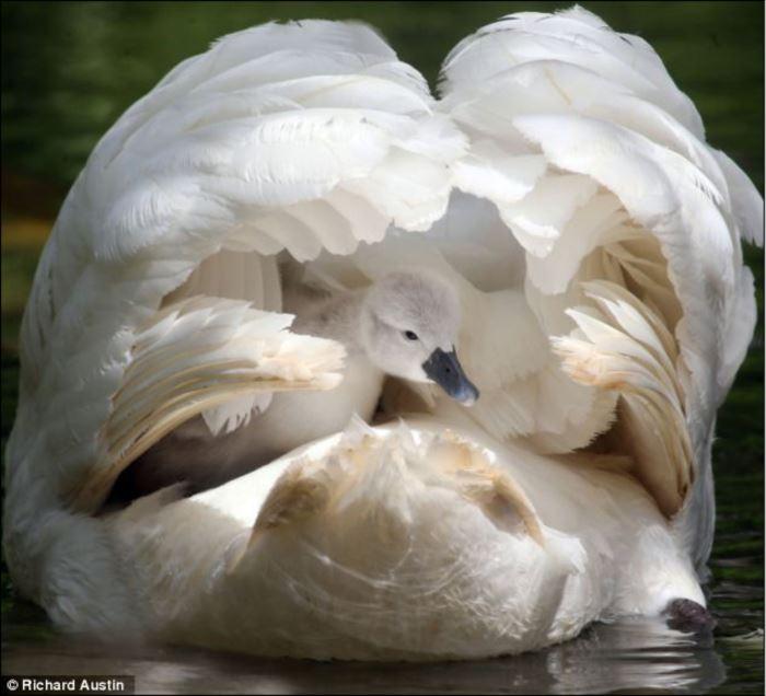 かわいい鳥 27.0