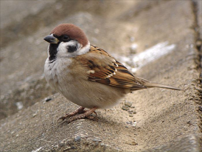 かわいい鳥 28.0