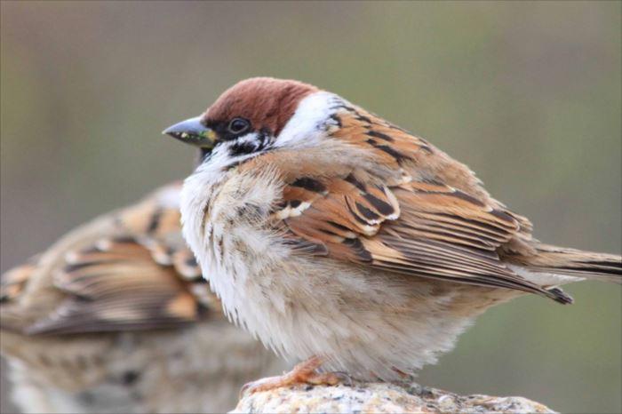 かわいい鳥 28.1