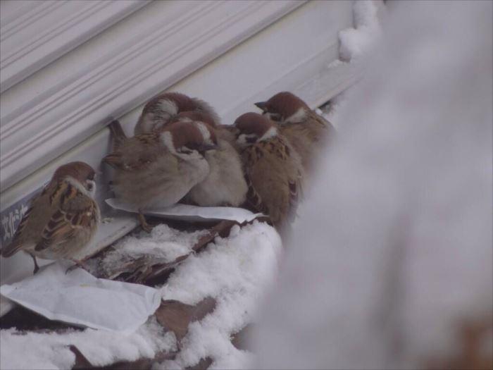 かわいい鳥 28.2