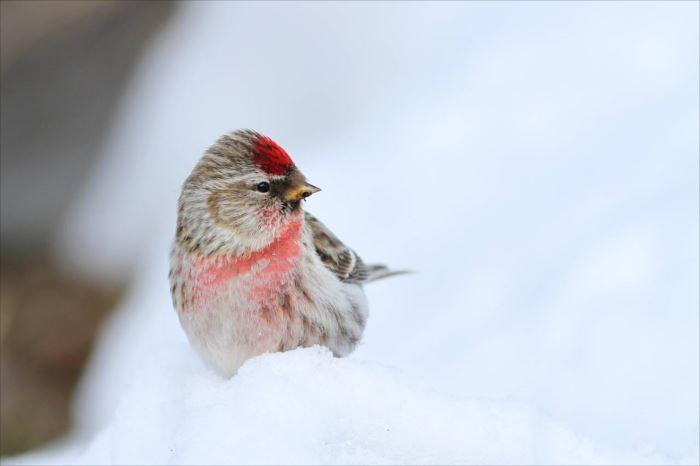 かわいい鳥 29.0