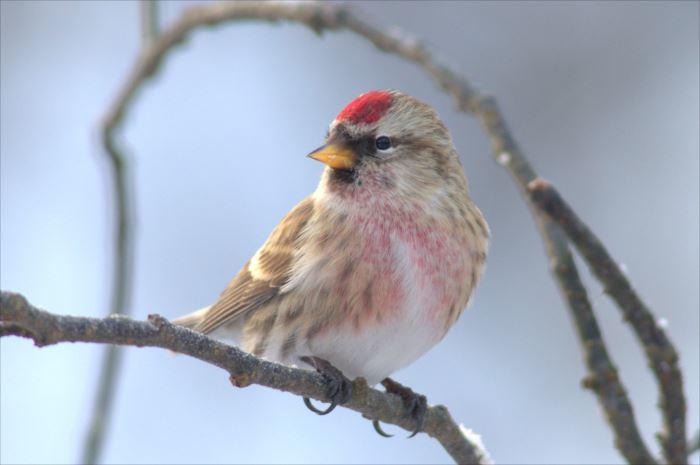 かわいい鳥 29.1