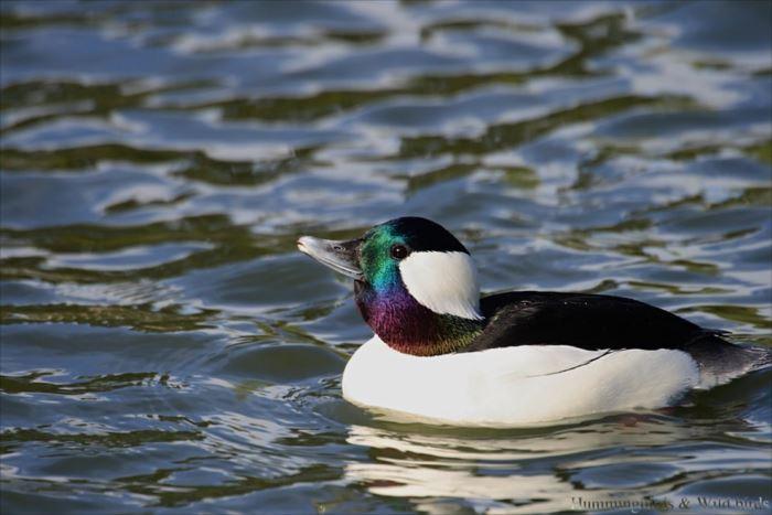 かわいい鳥 3