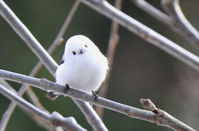 かわいい鳥 30.0