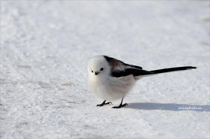 かわいい鳥 30.1