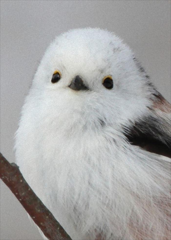 かわいい鳥 30.2