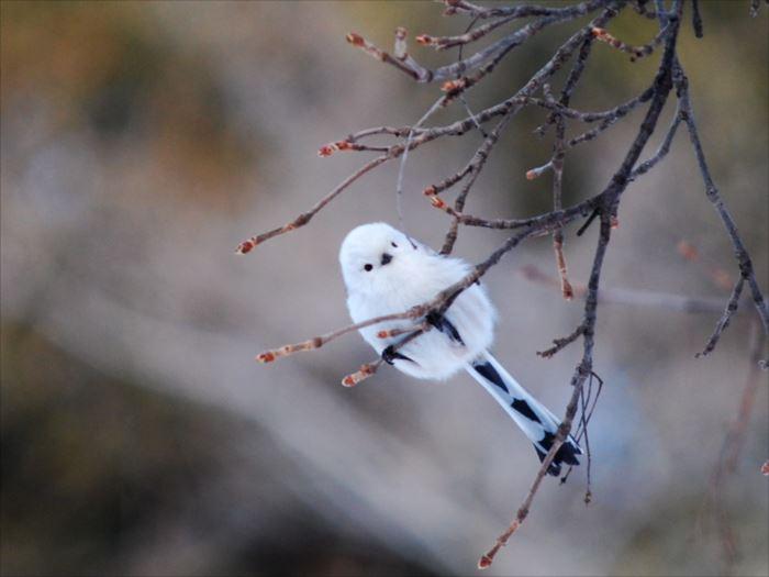 かわいい鳥 30.4
