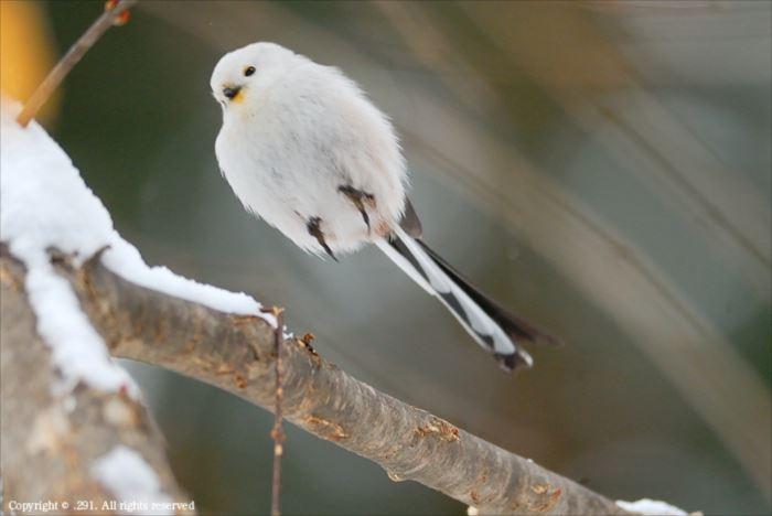 かわいい鳥 30.5