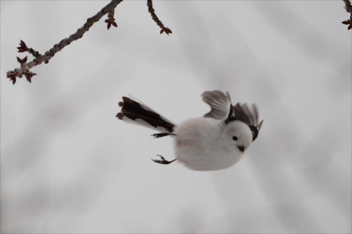 かわいい鳥 30.6
