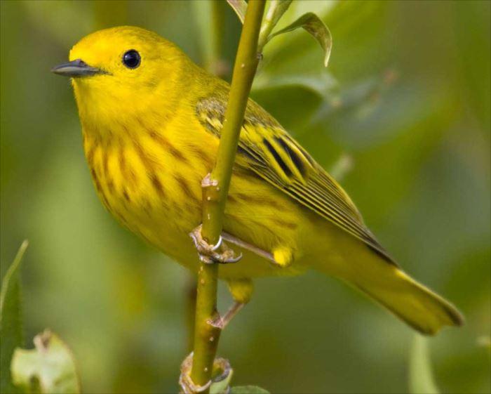 かわいい鳥 31.0