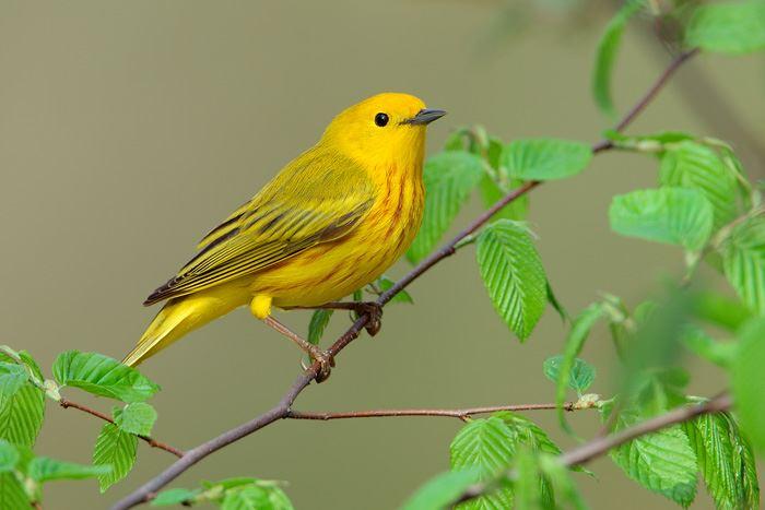 かわいい鳥 31.1