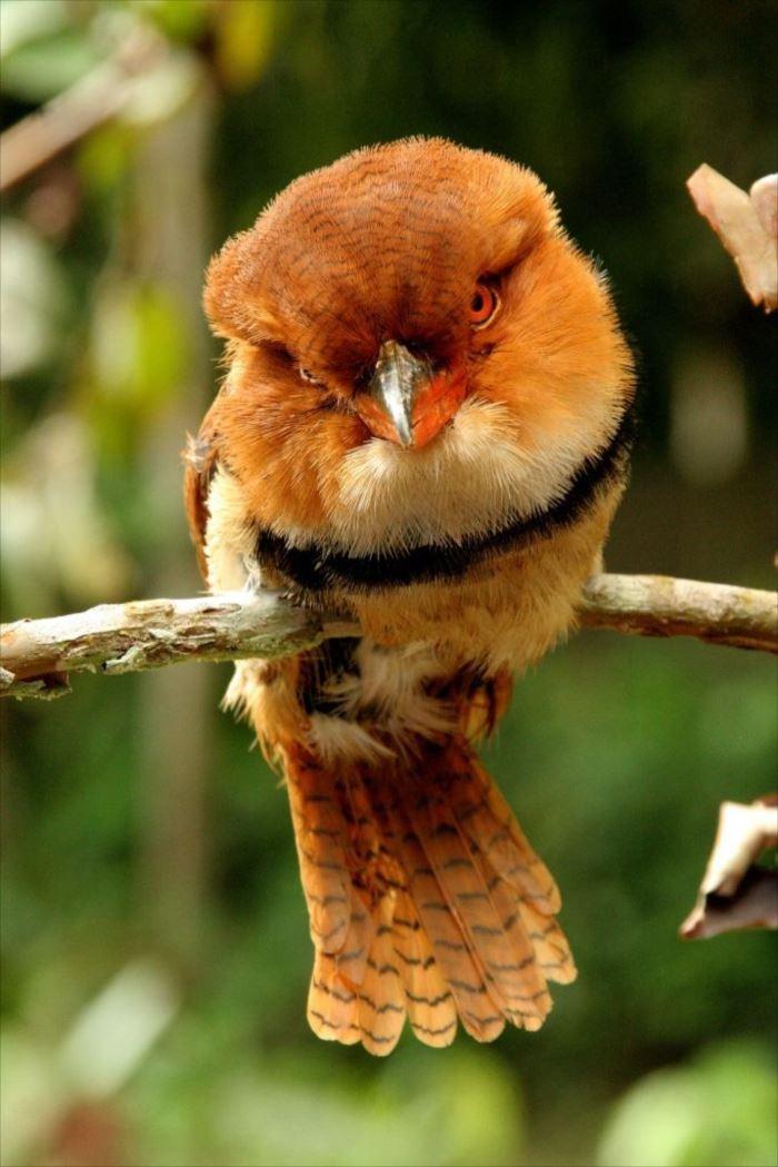 かわいい鳥 32.0