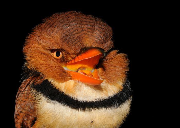 かわいい鳥 32.1