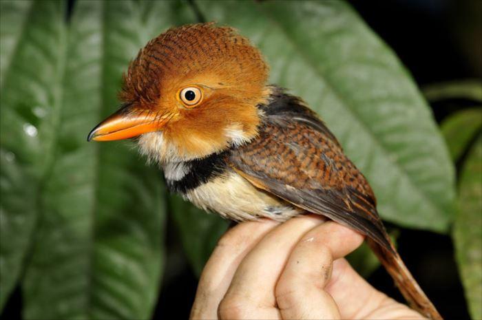 かわいい鳥 32.12