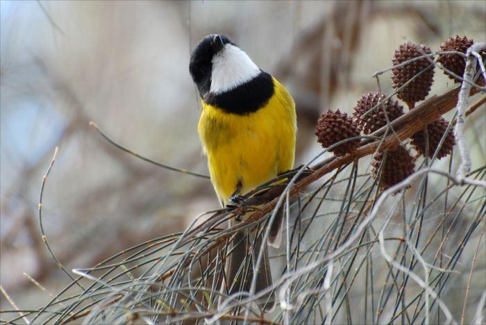 かわいい鳥 33.1