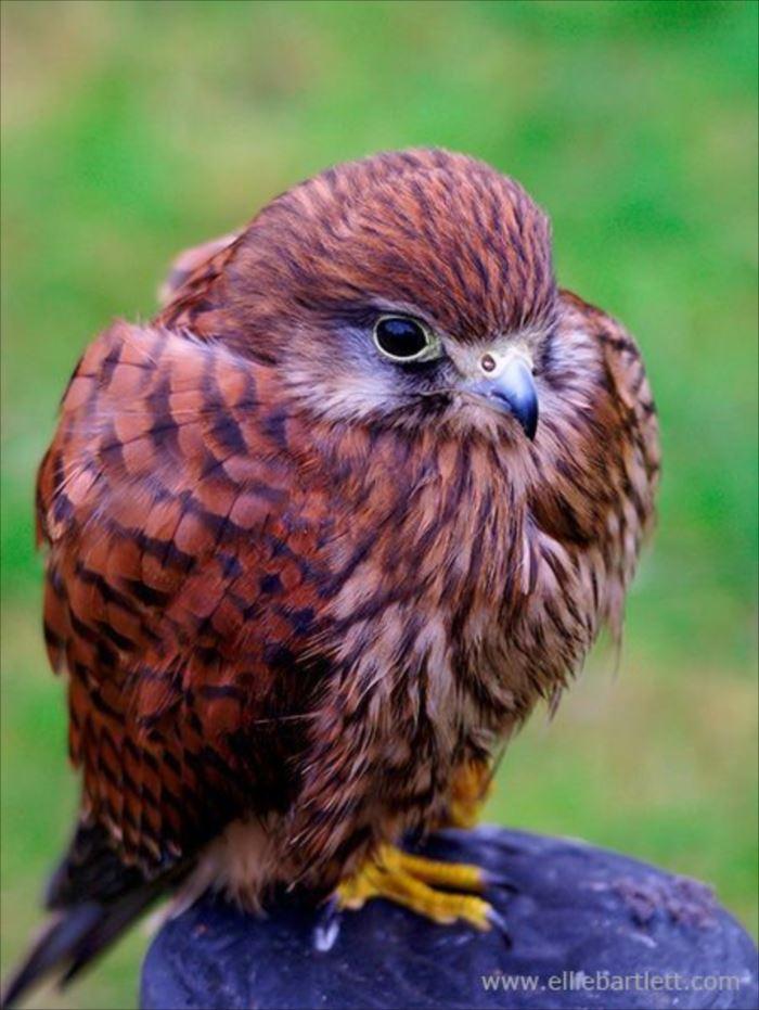 かわいい鳥 34.0