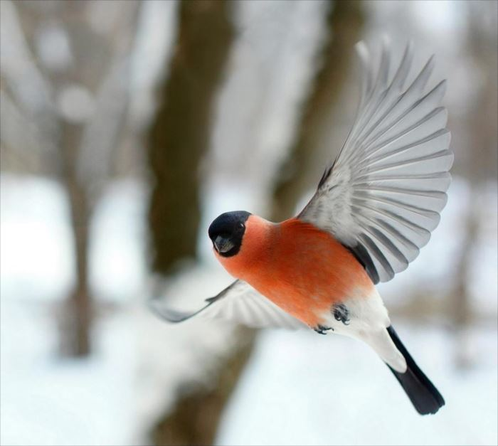 かわいい鳥 35.1