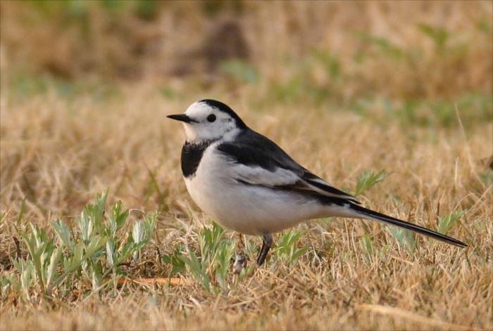 かわいい鳥 36.1