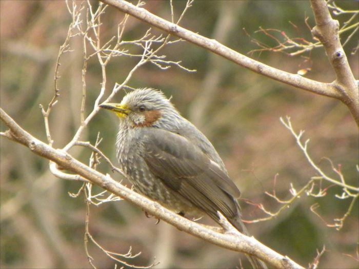 かわいい鳥 38.0
