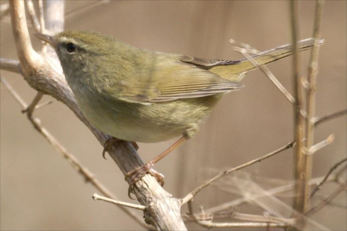 かわいい鳥 40.0