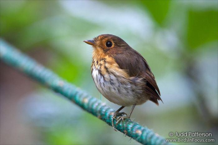 かわいい鳥 41.0