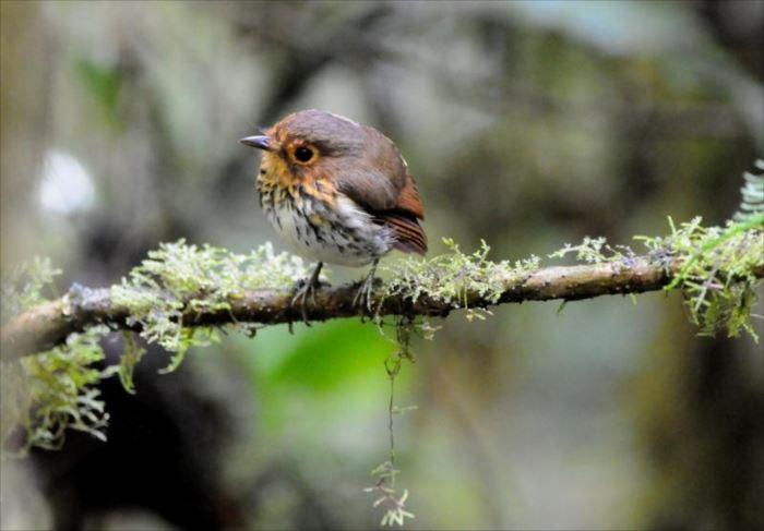 かわいい鳥 41.1