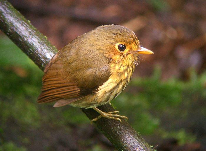 かわいい鳥 41.2