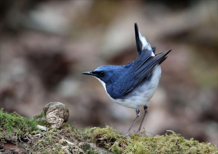 かわいい鳥 42.0