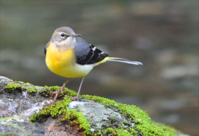 かわいい鳥 43.0