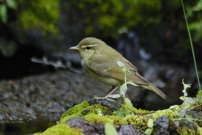 かわいい鳥 44.0