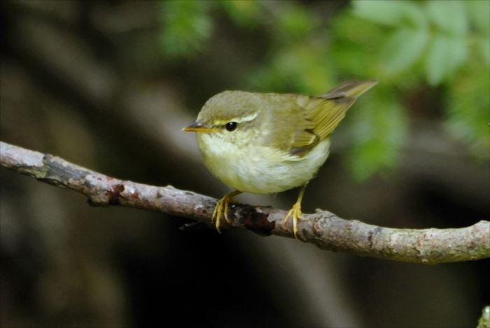 かわいい鳥 44.1