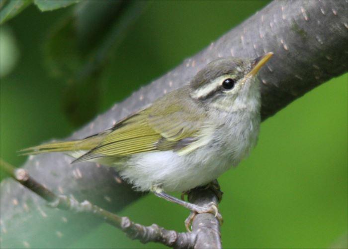 かわいい鳥 45.0