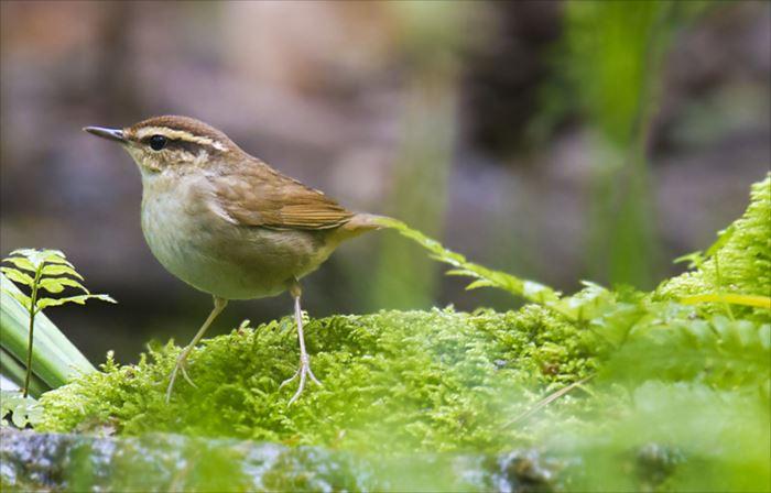かわいい鳥 46.0