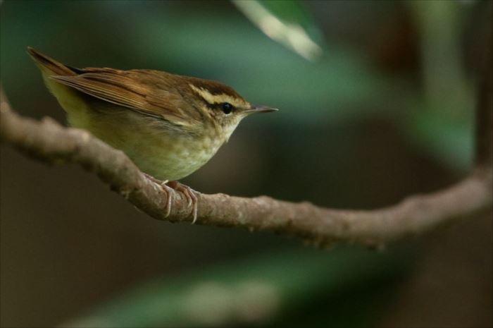かわいい鳥 46.1