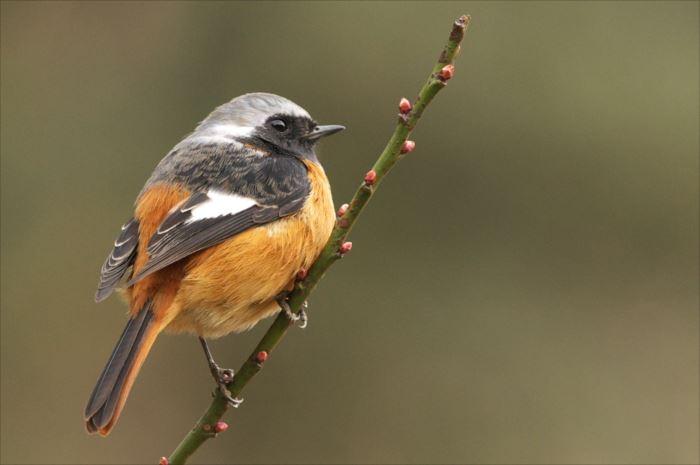 かわいい鳥 48.1