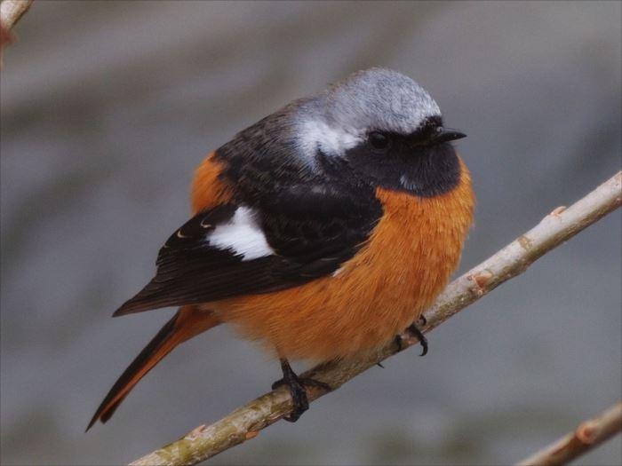 かわいい鳥 48.2