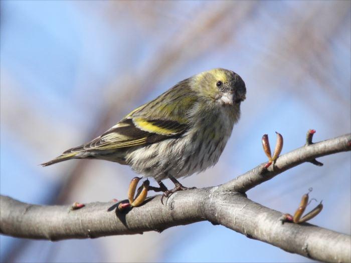 かわいい鳥 49.0