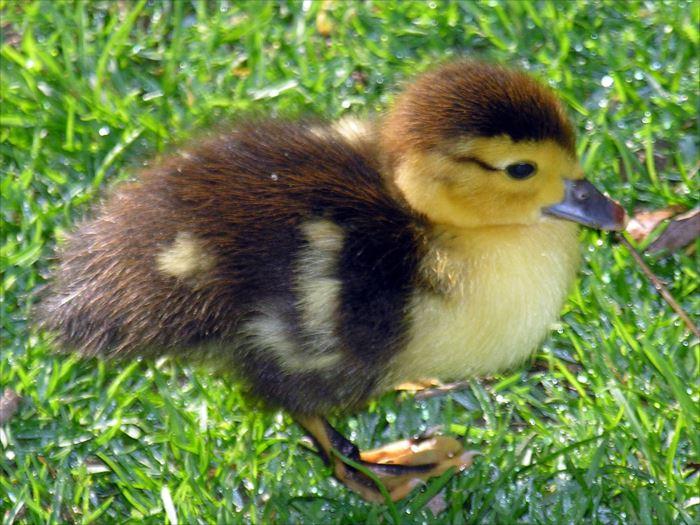 かわいい鳥 5.1