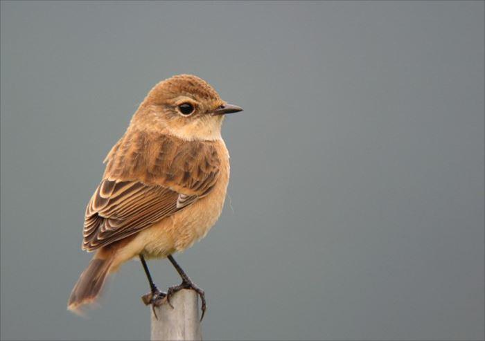かわいい鳥 50.0