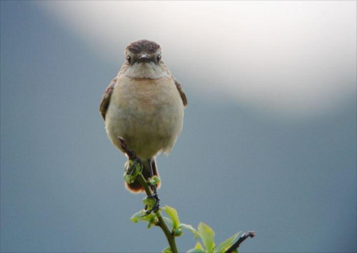 かわいい鳥 50.1