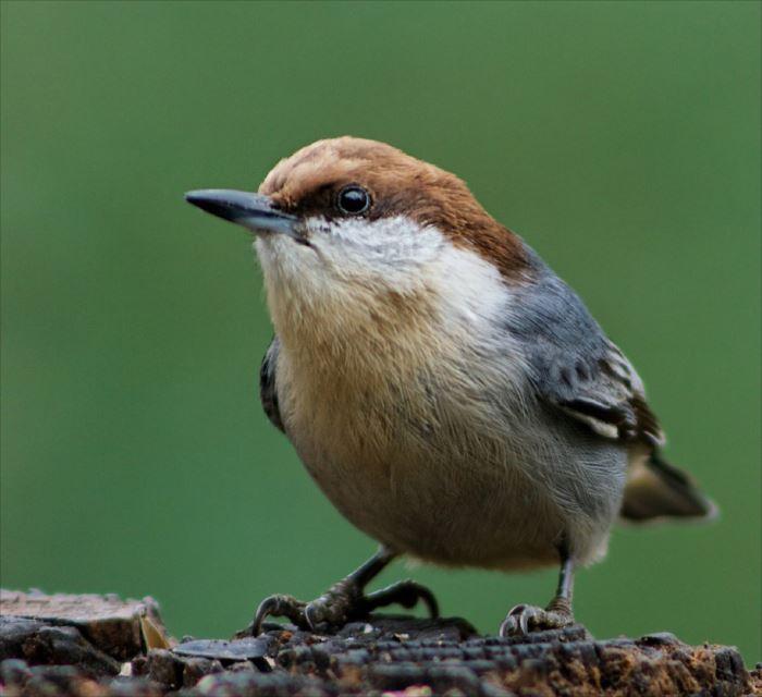 かわいい鳥 6.1