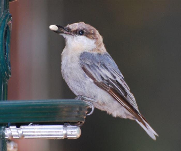 かわいい鳥 6.3
