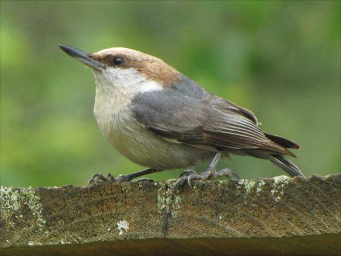 かわいい鳥 6.4