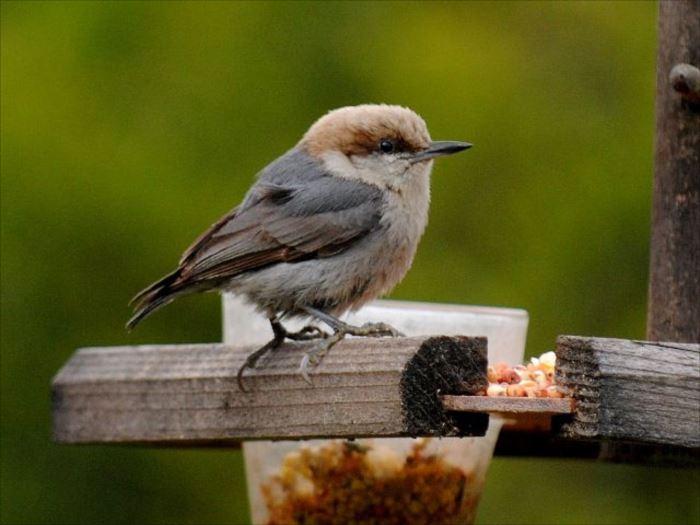 かわいい鳥 6
