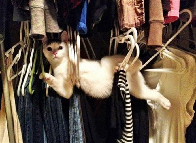 猫おもしろ画像 1