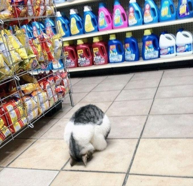猫おもしろ画像 17