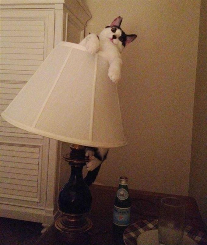 猫おもしろ画像 27