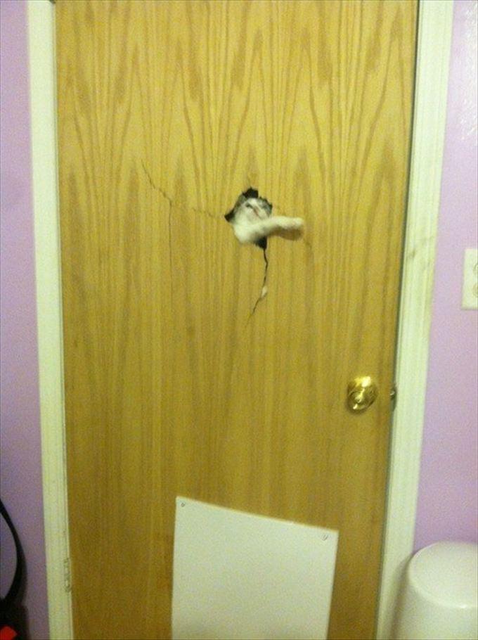 猫おもしろ画像 29