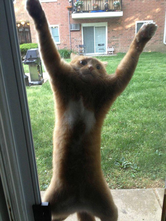 猫おもしろ画像 31