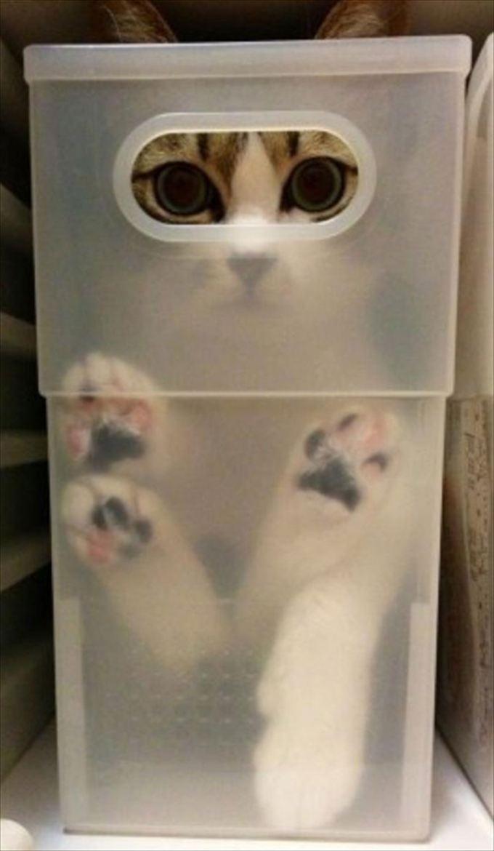 猫おもしろ画像 33